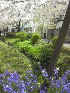 下北沢にて花見